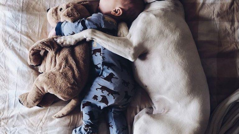 A kutya és a 8 hónapos baba